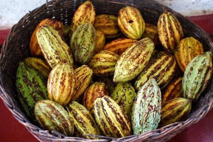 Podcast Ruta del cacao y del chocolate en Tabasco. Foto Travelling Spice.