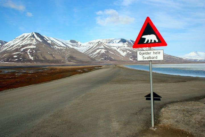 Cuidado con los osos polares en Svalbard foto archivo