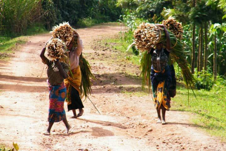 Ruanda Gorilas Foto Dimitro 66
