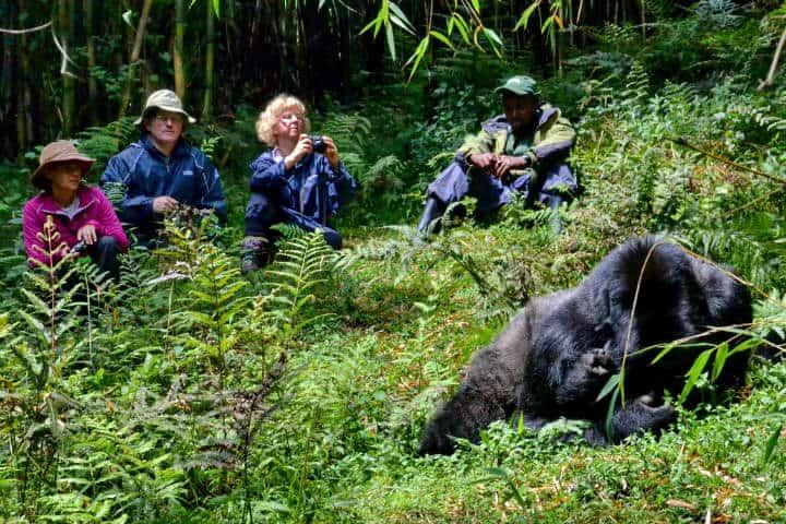 Ruanda Gorilas Foto Thomas Becker 4