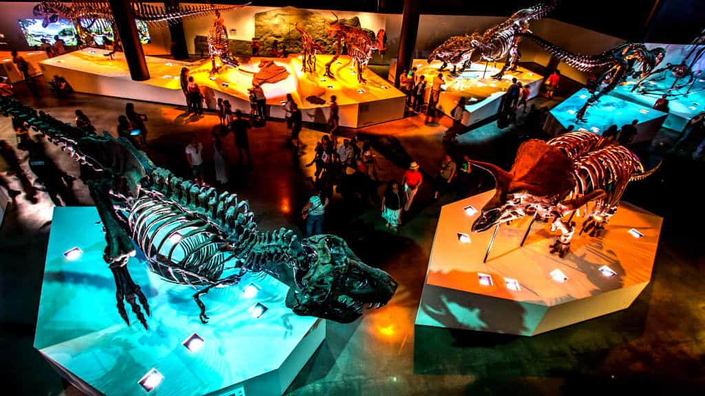 Houston HMNS_DINO_WS_2_102268