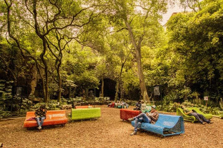 Otoño CDMX Vasconcelos jardin audiorama Foto Bosque de Chapultepec 1