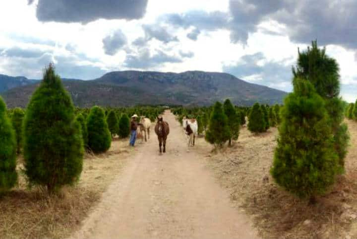 Parque las mancañas Foto Iturbide Travel