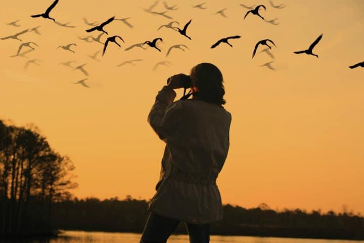 pelicanos borregones bird watching foto archivo el souvenir