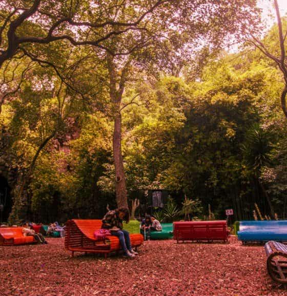 portada Otoño CDMX Audiorama Foto Bosque de Chapultpec 2
