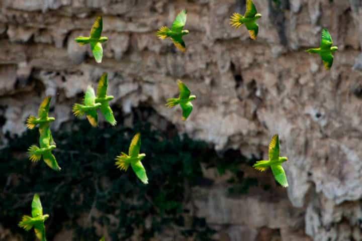 sima de las cotorras foto Explorando Chiapas
