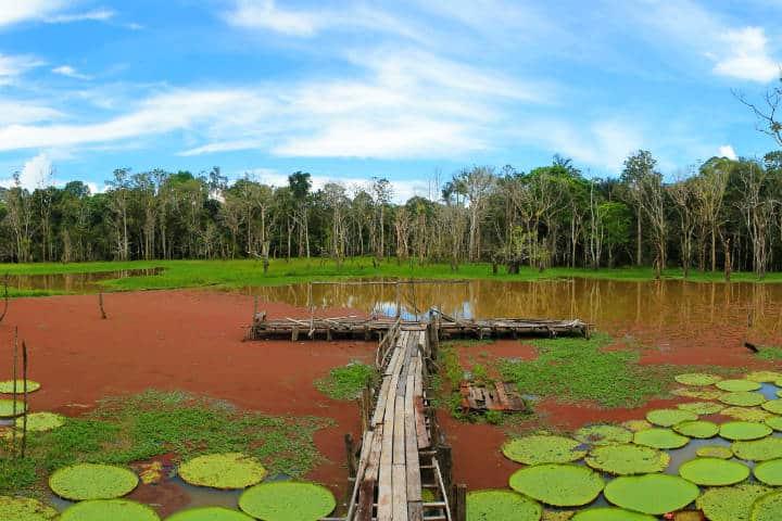 Amazonas Brasil Foto Vaquero Francis