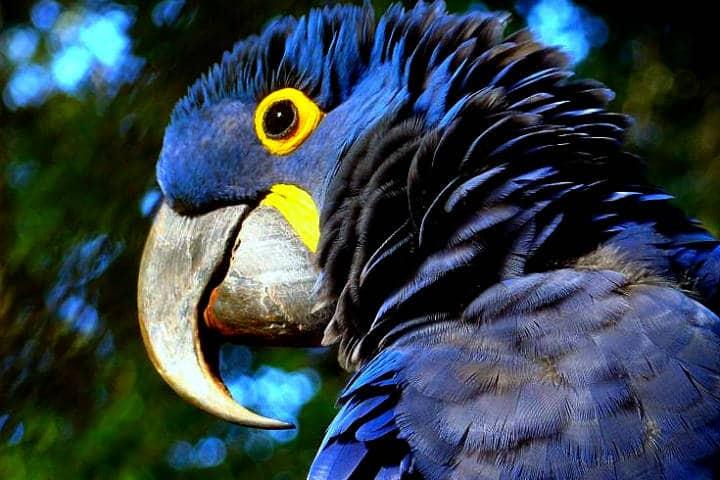 Amazonas Foto Anna Cotta 2