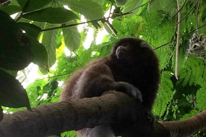 Amazonas Foto Brownpau