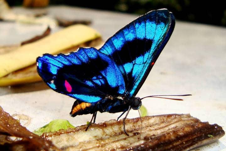 Amazonas Foto Hector Montero
