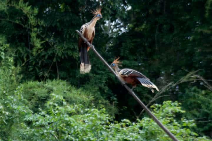 Amazonas Foto Ricardo Freitas 2