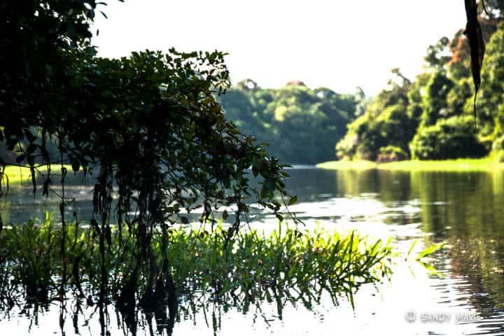 Amazonas Foto Sandy Marie