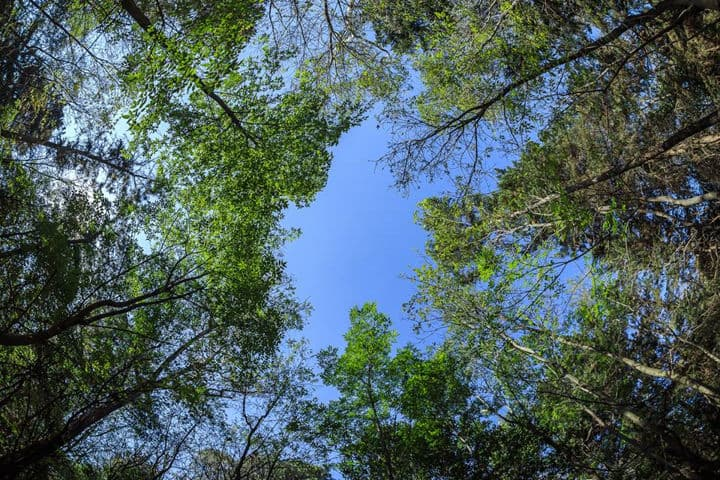 Bosques CDMX Tlalpan Foto Bosque de Tlalpan 10