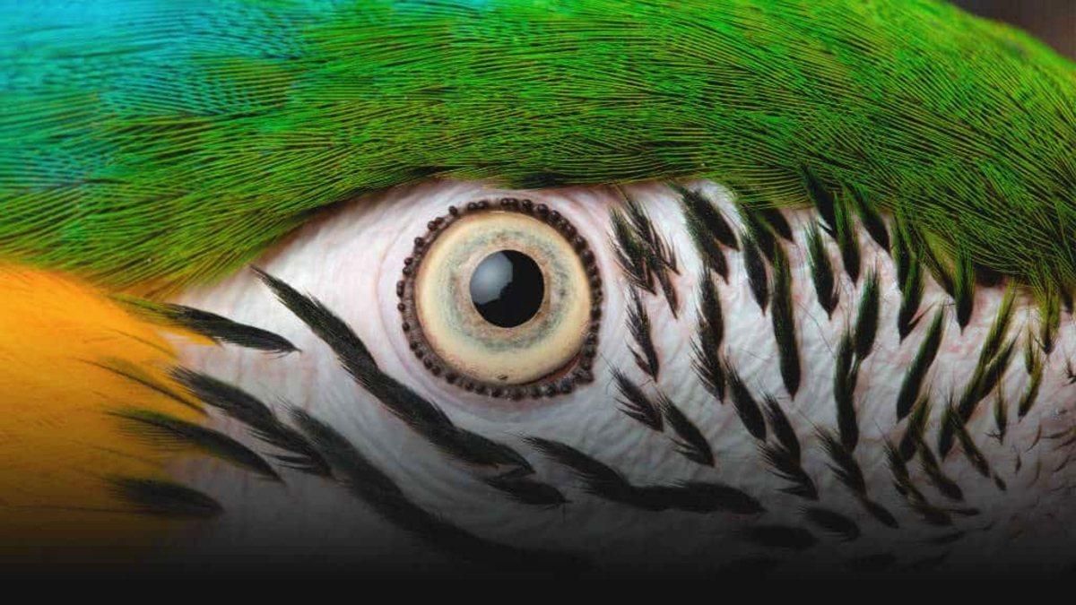 El Nido aviario en el Estado de México. Foto El Nido.