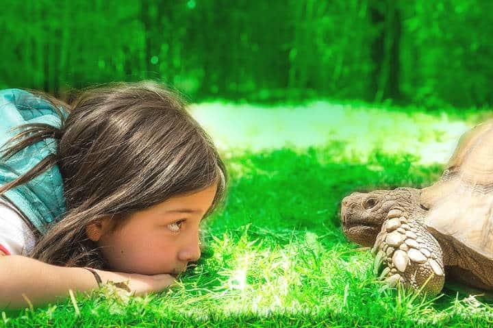 El Nido tortuga Foto El Nido 2
