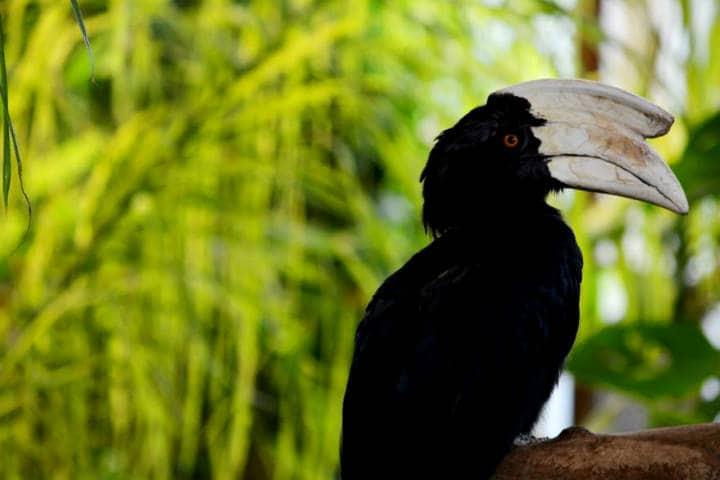 El nido Calao foto Raul García
