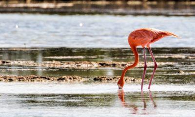 Parque Nacional Ciénaga de Zapata en Cuba. Foto Anne & Saturnio Miranda.