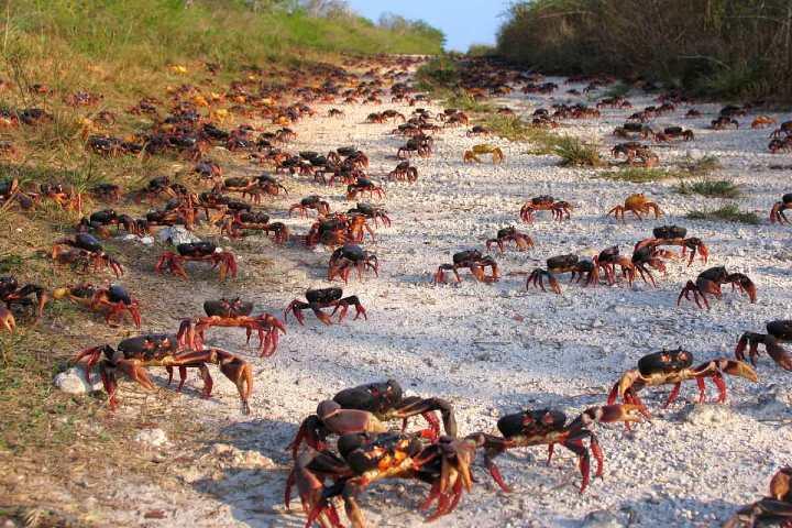 Parque Nacional Ciénaga de Zapata en Cuba. Foto Archivo.