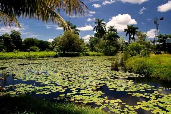 Parque Nacional Ciénaga de Zapata en Cuba. Foto Wikimedia Foundation.