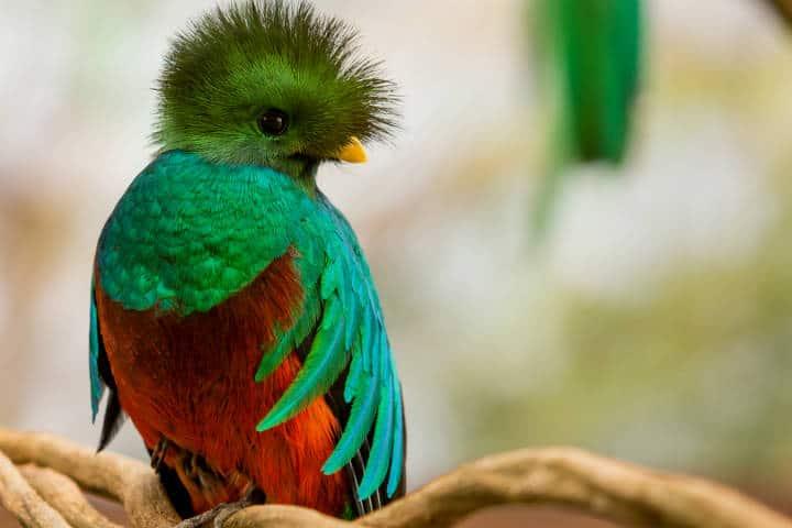 Quetzal El Nido Foto El Nido 1