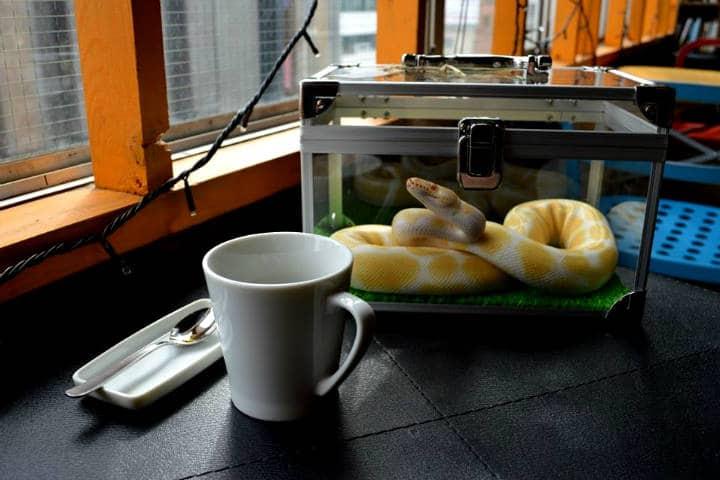 Tokyo Snake Central Foto Cafe & Snake 12