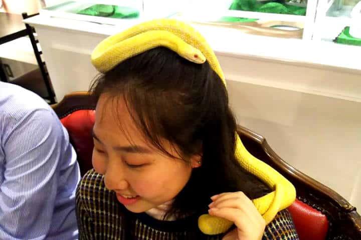 Tokyo Snake Central Foto Cafe & Snake 13