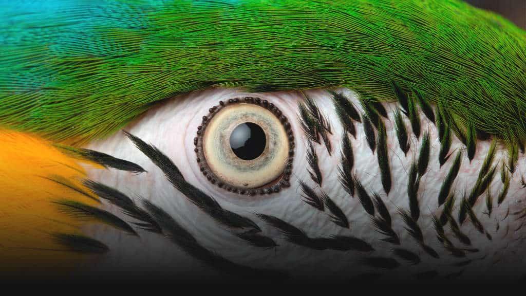 portada El Nido Guacamaya Foto El Nido 3