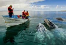 portada que hacer 2018 Ballena gris Foto Turismo La Paz 10