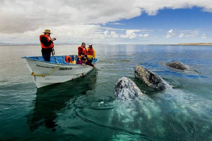 que hacer 2018 Ballena gris Foto Turismo La Paz 10