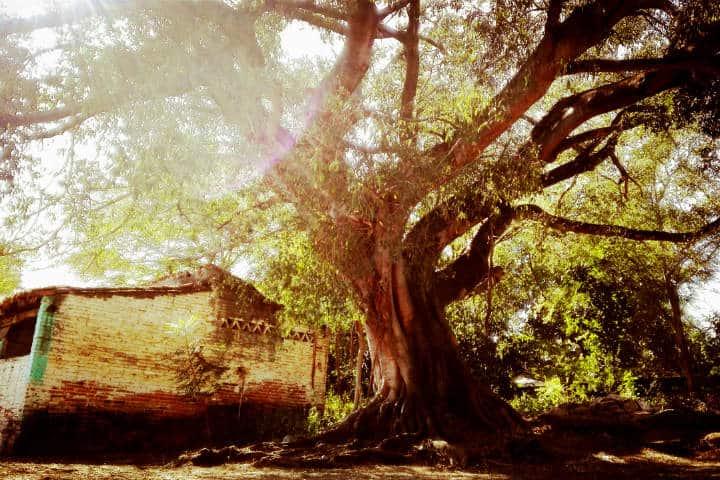 Naturaleza-y-diversidad-Foto-Luis-Juarez-16