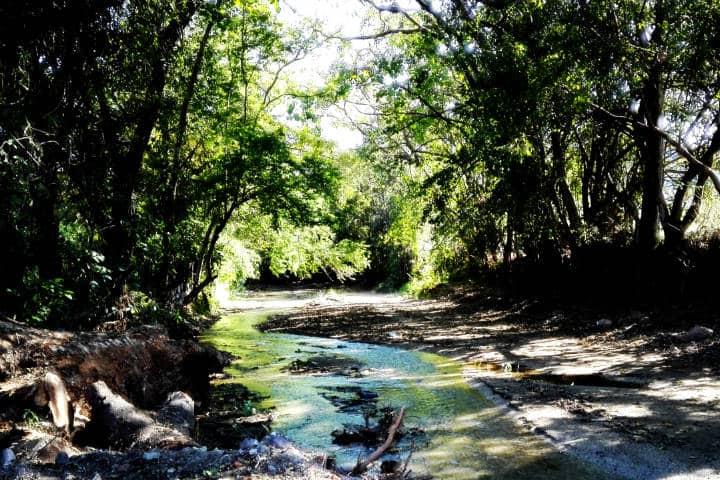 Contacto-con-la-vegetación-Foto-Luis-Juarez-9