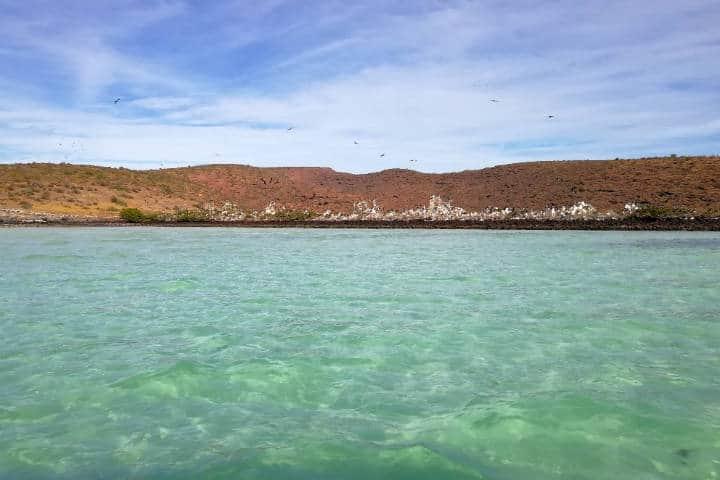 La Paz-Nado con Lobos Marinos Foto El Souvenir