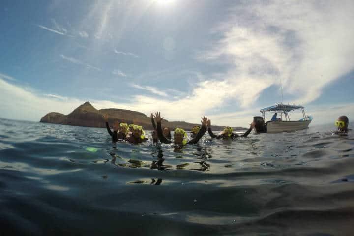 Nado con lobos marinos La Paz Foto El Souvenir