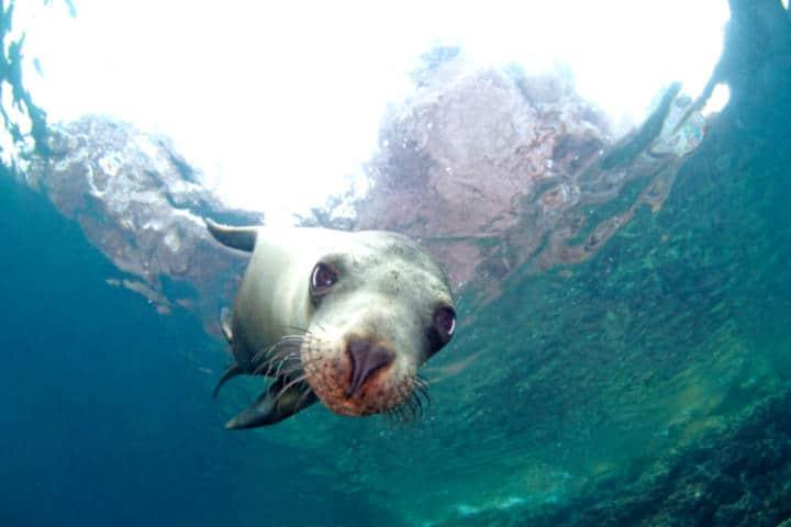 Nado con lobos marinos La Paz Foto RED Travel Mexico 1
