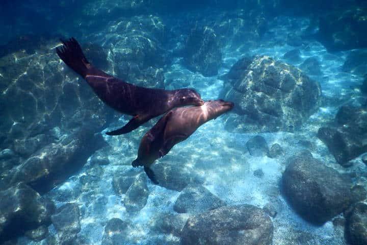 Nado con lobos marinos La Paz Foto RED Travel Mexico 2