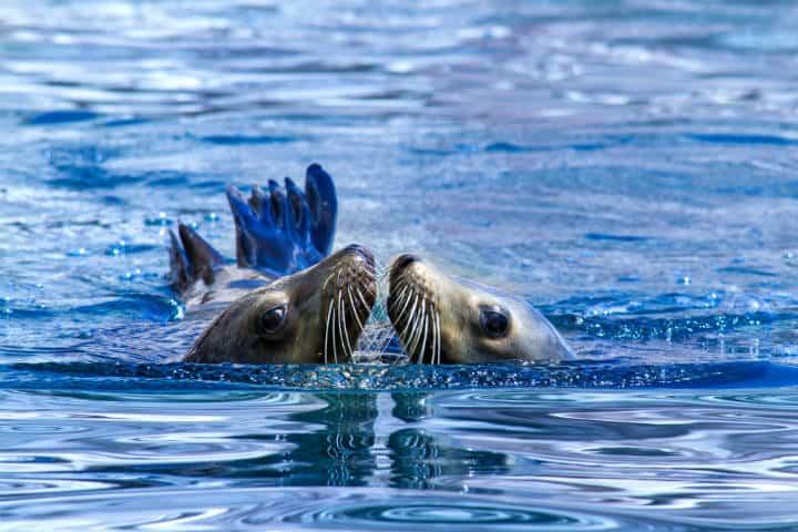 Nado con lobos marinos La Paz Foto Turismo La Paz 1