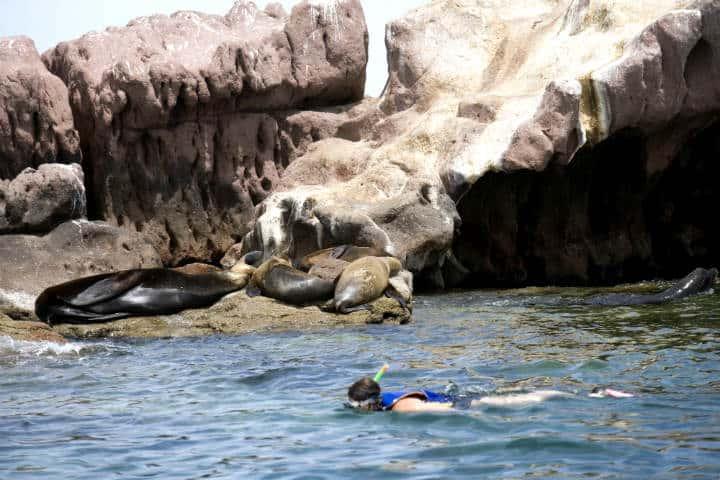 Nado con lobos marinos La Paz Foto Turismo La Paz 4