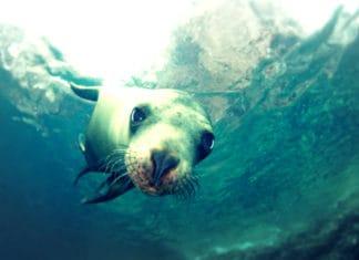 portada Nado con lobos marinos La Paz Foto RED Travel Mexico 1