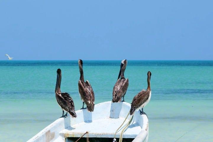Protegidos-por-el-mar-Isla-Holbox-sustentable-Foto-La-Isla-11