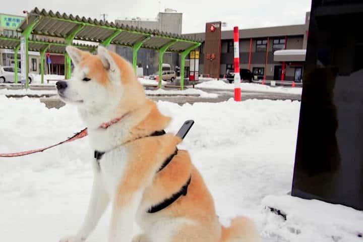 Akita Google Street View 14