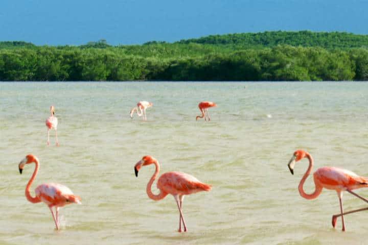 Las Coloradas Yucatán Foto Gloria Villanueva 4