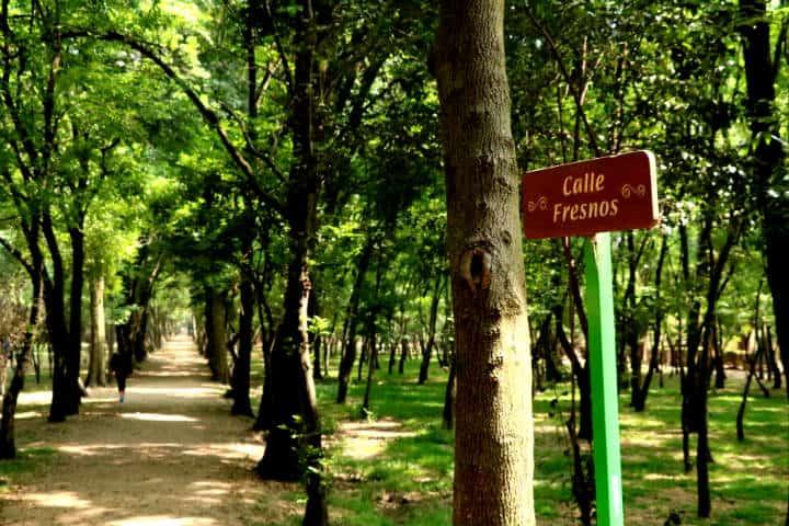 Viveros Coyoacán Foto Fidel Enríquez 33