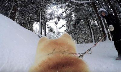 googledogview