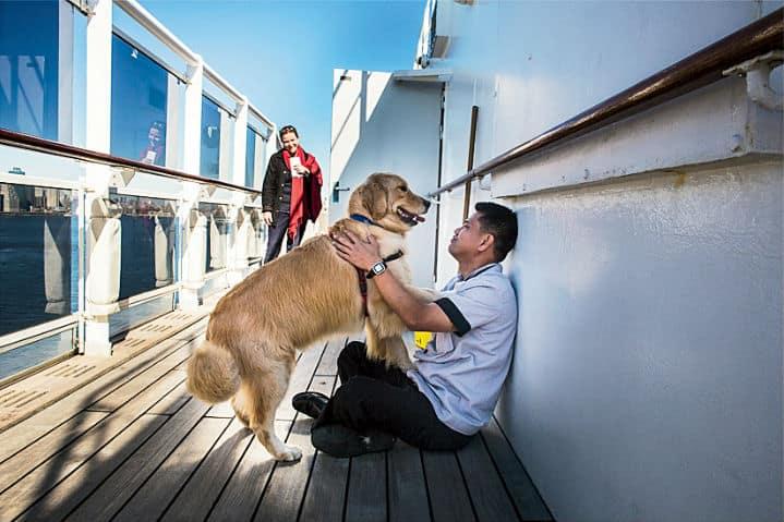 perros en un crucero