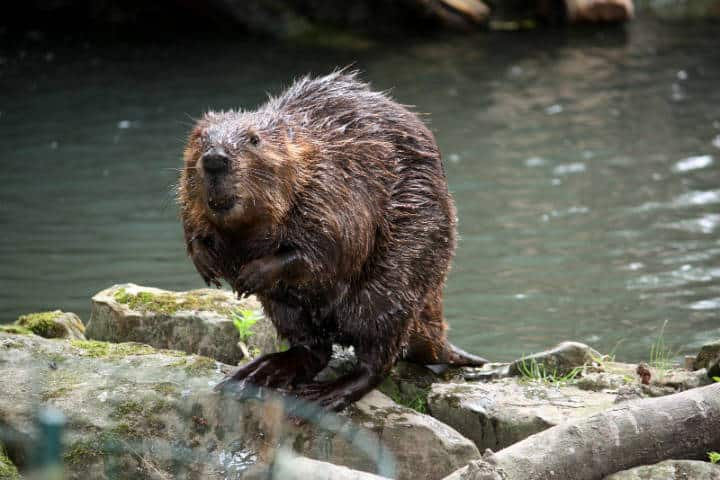 Parque-Nacional-Beaver-Foto-Bryan-Davies