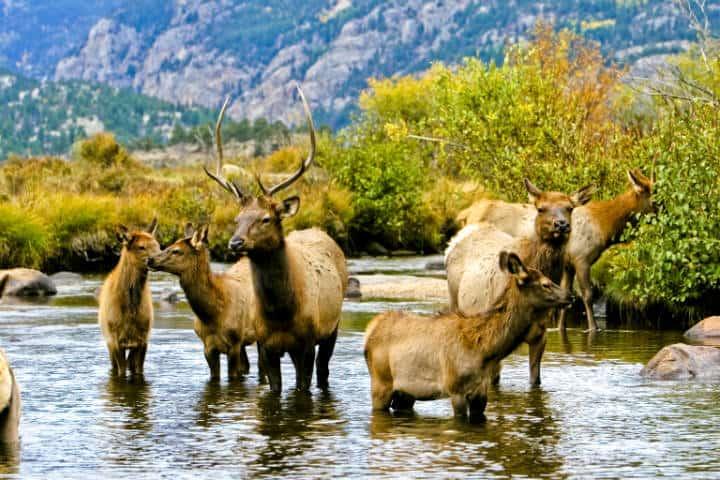 Parque-Nacional-Montanas-Rocallosas-Foto-Colorado-1