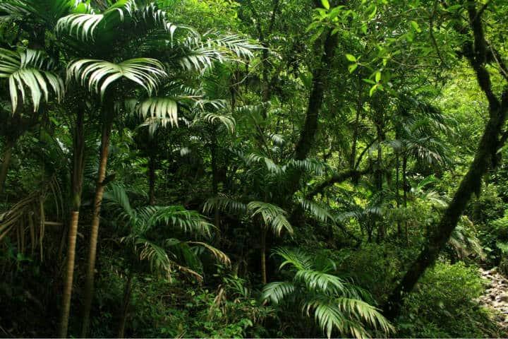 Perú Cascada Gocta Foto Clivid 1