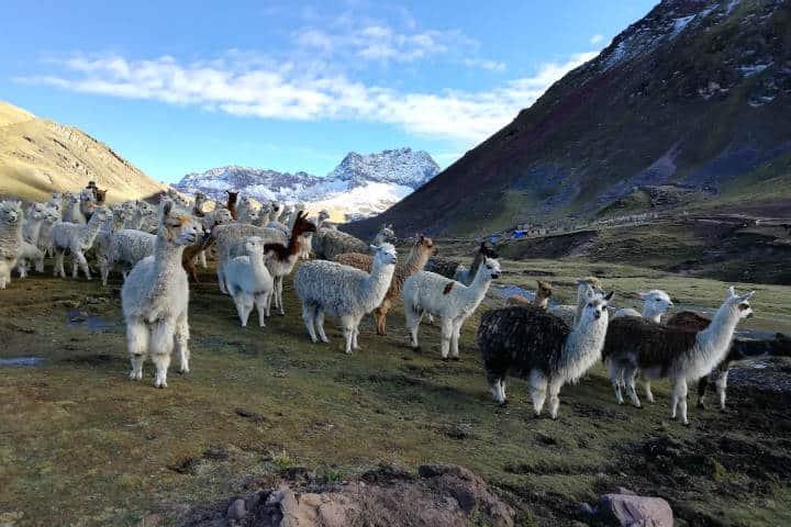 Vinicunca Montaña de los Siete Colores Foto El Souvenir 1