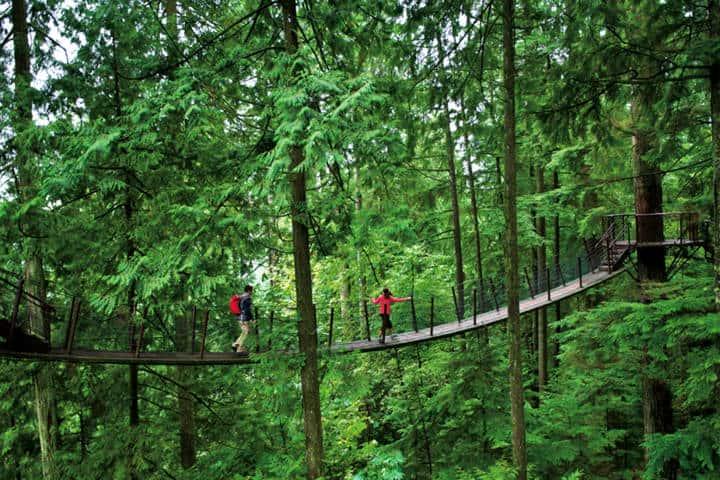 Puente-Capilano-Treetops-Foto-CapBridge