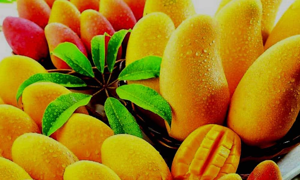 Festival-del-Mango-Todos-Santos-Foto-Archivo